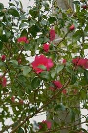 flower12232007-03.jpg