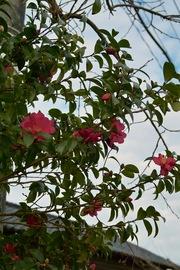 flower12232007-06.jpg