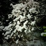 snow01262011ip01.JPG