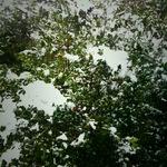 snow01262011ip02.JPG